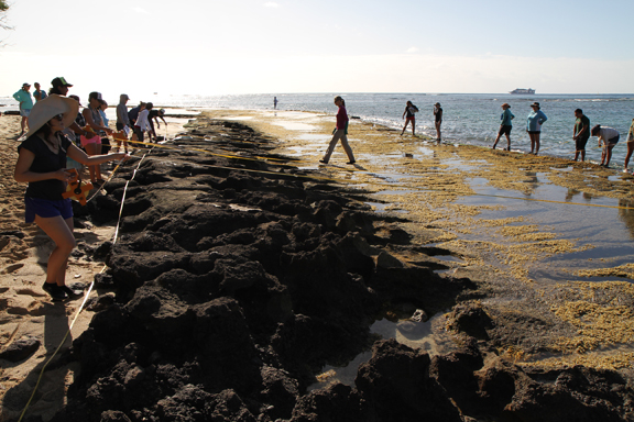 Student and teacher volunteers aid in cataloging life in the intertidal zone.