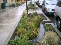 stormwater_planter06