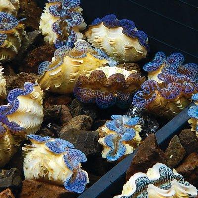 topics_aquaculture