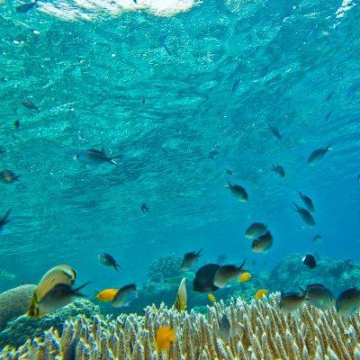 topics_fish