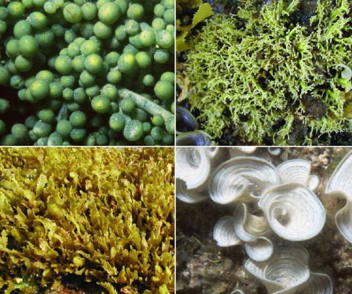 Hawaiian Reef Plants Book Cover