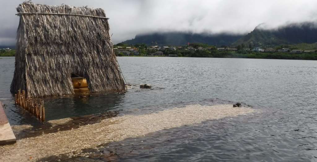Water overtopping wall at He'eia Fishpond