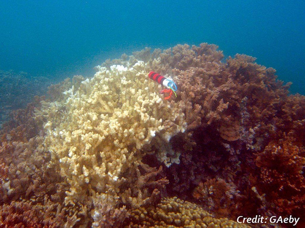 A large outcrop of coral shows nearly half discolored a distinct white