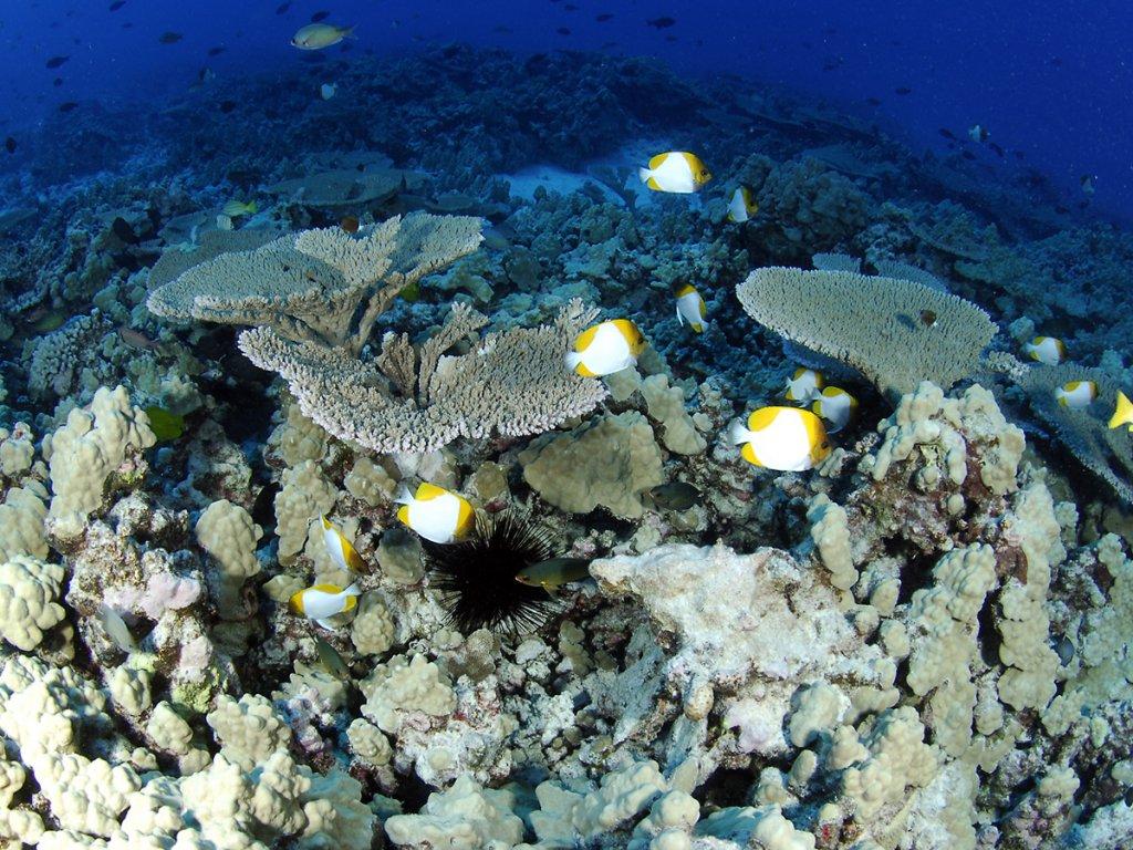 Colorful fish swim around coral of various varieties