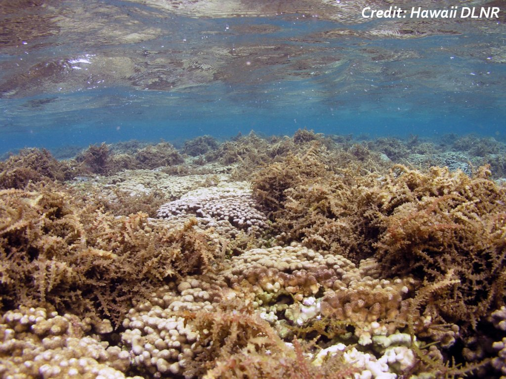 Groundwater-derived nutrient uptake in coastal ecosystems as driver of reef accretion-erosion balance