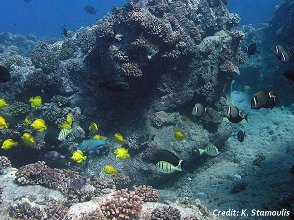 Assorted tropical fish swim around a tall coral outcrop