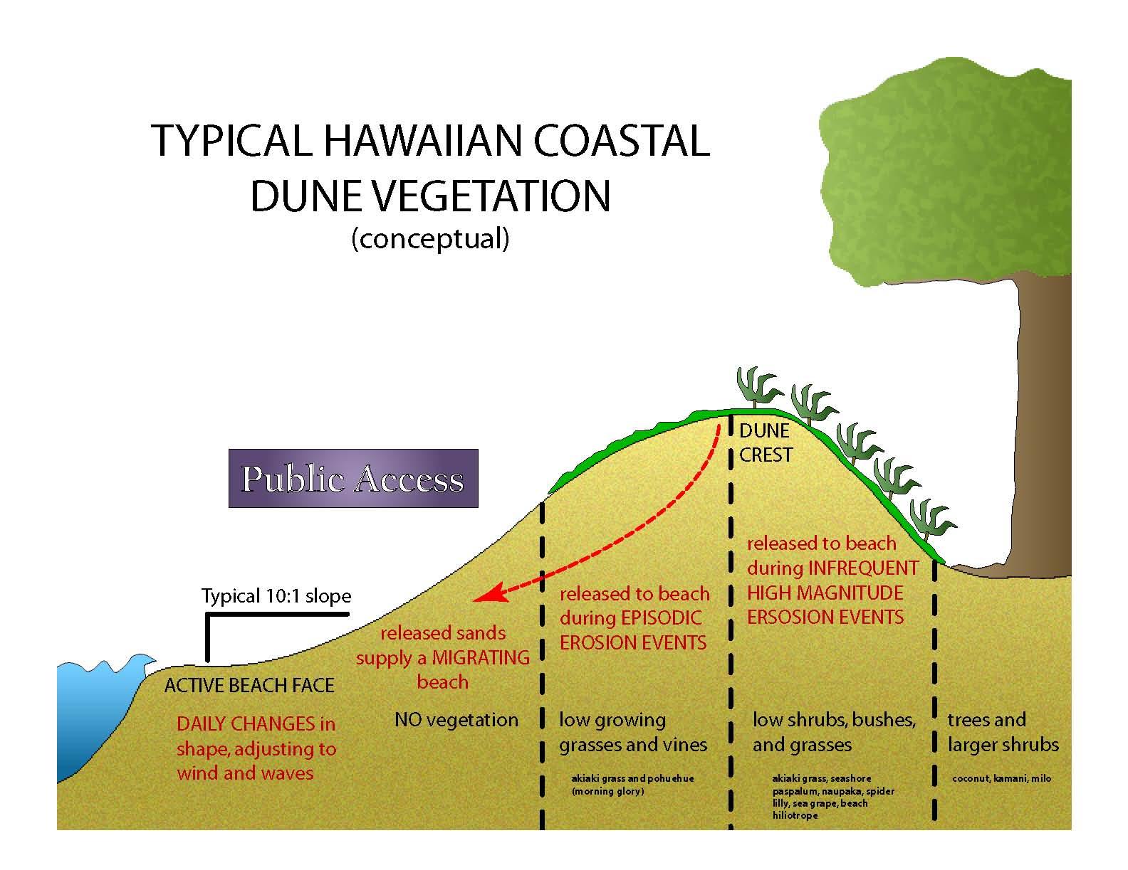 typical hawaiian coastal dune vegetation cartoon