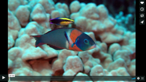 voice of the sea season 3 episode 10, Mutualism on the Reef