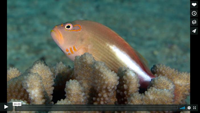 voice of the sea season 3 episode 11, Coral Reseach on Moorea