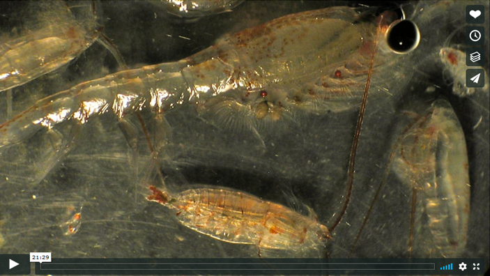 voice of the sea season 3 episode 18, Zooplankton in The Deep Sea