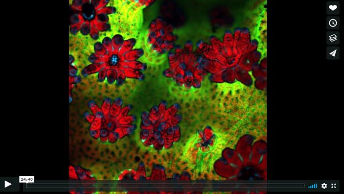 voice of the sea season 3 episode 6, Building Super Corals