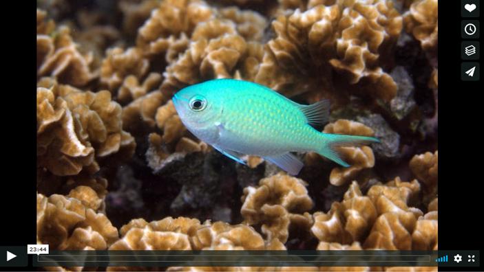 voice of the sea season 3 epidose 7, How Fish help Corals Grow