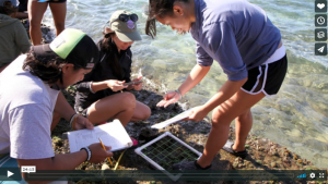voice of the sea season 4 episode 3, Intertidal Algae and Invertebrates