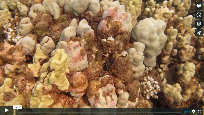 voice of the sea season 4 episode 7, Contaminated Conservation Area