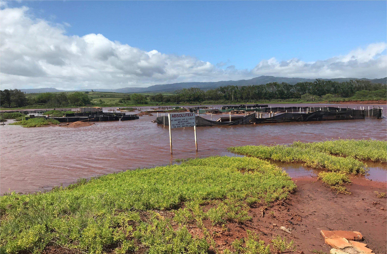Hanapepe Salt Ponds flooded