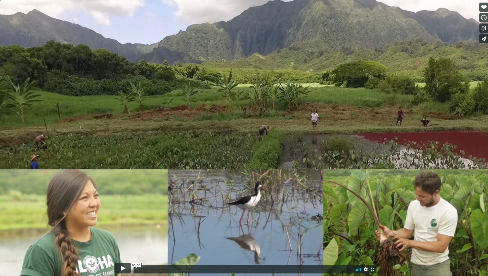 voice of the sea, season 6, wpisode 1 is titled Hidden Benefits of Farming Kalo. composit photo of mountains, taro farm, people working, and native bird.