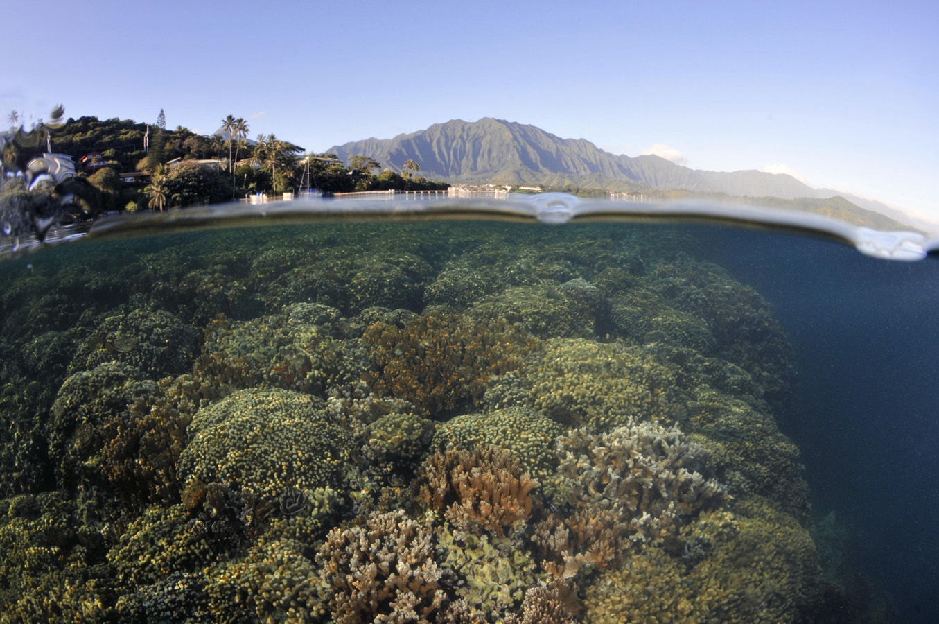 Split field of view showing coral reef below the water surface and mountains and bay shore above.