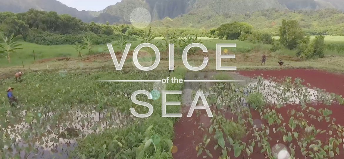 voice of the sea text over kalo field