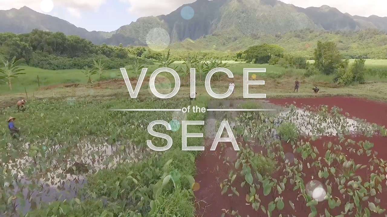 Voice of the Sea wins five Telly Awards out of record-shattering number of entries from around the world