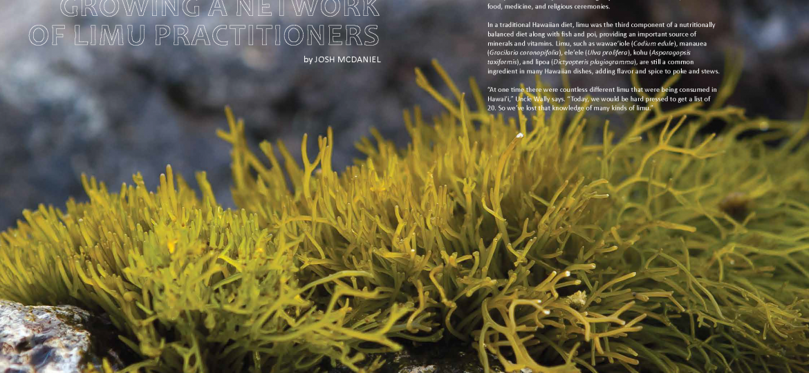"""opening spread for """"growing a network of limu practitioners"""" article, Ka Pili Kai Hooilo 2019"""