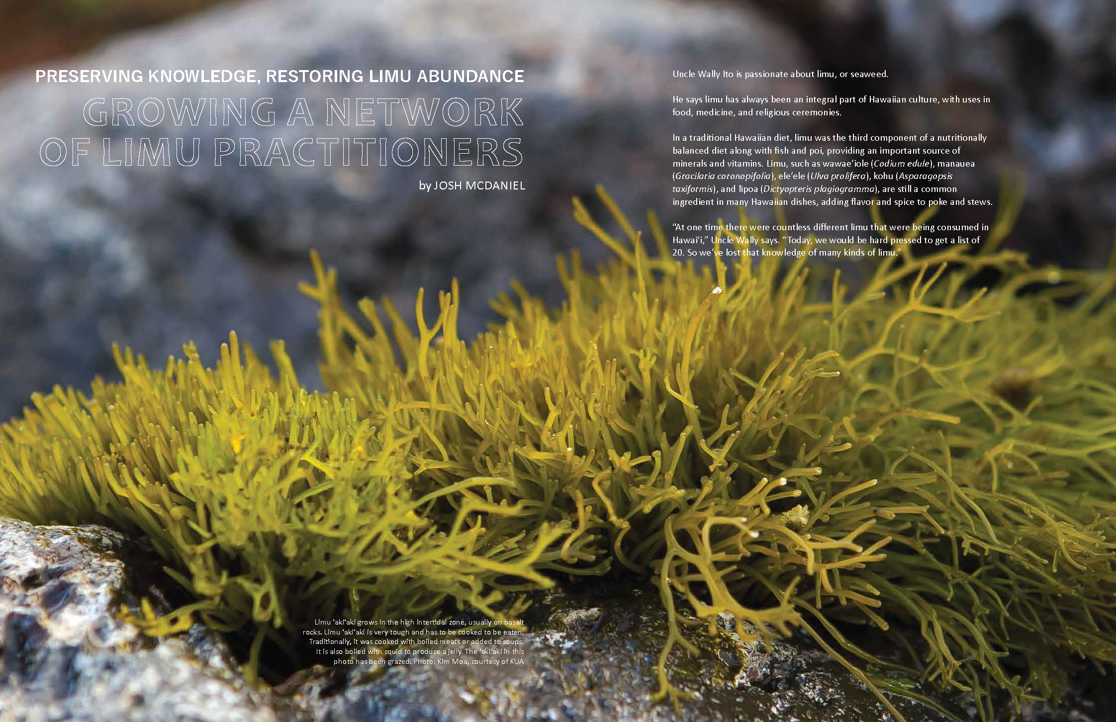 "opening spread for ""growing a network of limu practitioners"" article, Ka Pili Kai Hooilo 2019"