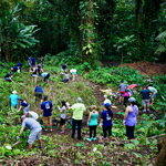 Staff members pull plants amongst a tropical forest setting