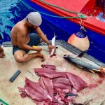 Filleting fresh caught fish at dock in Marshall Islands