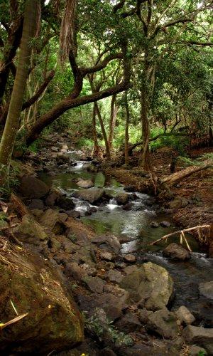 Manoa Stream