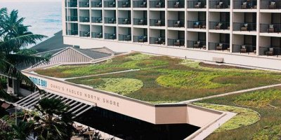 Turtle Bay Green Roof, Surf News Network