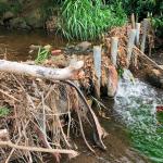 Stream Clogged with Vegetation Debris