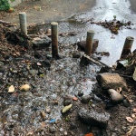 Stream Cleared of Vegetation Debris