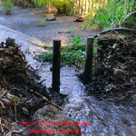 Stream partially cleared of vegetation debris