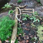 Debris in Channelized part of Pūkele Stream