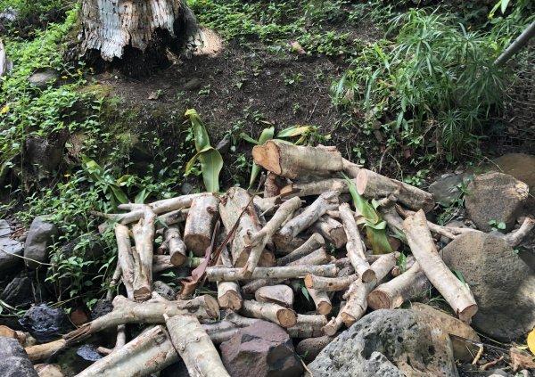 Yard Waste in Stream Channel, Wai'ōma'o Stream near 10th Ave