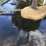 Kahuawai Spring at Sumida Farm