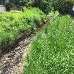 Stream Choked with Invasive Grasses