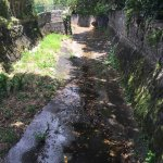 Channelized Stream