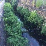 Lower Maikiki Stream