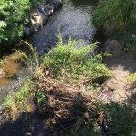 Debris from upstream, Manoa Stream