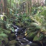 Unnamed Stream, Hawaiʻi Island