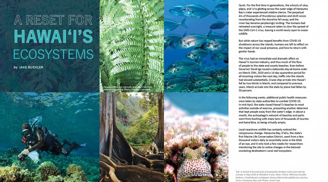 lead spread for Ka Pili Kai article A Reset for Hawai'i's Ecosystems. Photos of green Hawaiian fern, trees with large roots, diver conducting survey abouve coral bed, closeup of blenny, and school of silver fish
