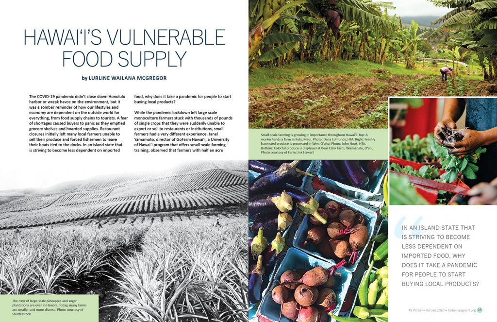 Lead spread for Ka Pili Kai article Hawaiʻi's Vulnerable Food Supply. Historic black and white image of Oahu pineapple fields, photo of small scale farm and banana trees, close up image of hands processing fresh produce, and close up of eggplant, beets, ochra.