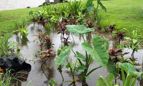 Tropical Rain Garden