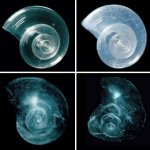 Four tiny plankton shells show stages of degradation