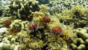 Sea Urchin Hatchery